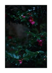 This work is 21/21 works taken on 2019/12/1 (shin ikegami) Tags: sony ilce7m2 a7ii sonycamera 50mm lomography lomoartlens newjupiter3 tokyo 単焦点 iso800 ndfilter light shadow 自然 nature naturephotography 玉ボケ bokeh depthoffield art artphotography japan earth asia portrait portraitphotography