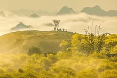 _MG_8348.0212.Tân Lập.Mộc Châu.Sơn La (hoanglongphoto) Tags: asia asian vietnam northvietnam northernvietnam northwestvietnam landscape scenery vietnamlandscape vietnamscenery mocchaulandscape morning nature sunny sunnymorning morningsunshine mist earlymorningfog hill ridge ridgehill sky mountain mountains vietnamnature canon tâybắc sơnla mộcchâu tânlập thiênnhiên phongcảnh phongcảnhmộcchâu buổisáng buổisángmộcchâu sươngmù sươngsớm nắng nắngsớm nắngsớmmộcchâu nhữngngọnđồi núi dãynúi bầutrời happyplanet asiafavorites minimalisme minimalistlandscape naturelandscape phongcảnhthiênnhiên hoanglongphoto tree people landscapeandpeople cây phongcảnhcóngười canoneos5dmarkii canonef100400mmf4556lisusm forest theforest earlysunshine