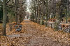 Alley (a7m2) Tags: vienna hietzing schöbrunn palacepark alley spazieren jogging visitors fountains statues monuments travel tourismus crownprincegarden orangerygarden