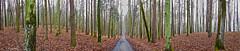 (Z. Andrzejewski) Tags: poland warmianmasurian olsztyn andrzejewski tree nature autumn fall outdoor forest woodland wald