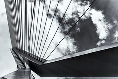 Erasmus Bridge (michael_hamburg69) Tags: rotterdam niederlande netherlands südholland holland southholland bridge brücke erasmusbrug erasmusbrücke schrägseilbrücke nieuwemaas rheinmaasdelta erasmus strasenbrücke dezwaan vanberkelbos 1996 cablestayedandbasculebridge steel stahl nl