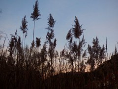 Abendrot / Red sunset (ursula.valtiner) Tags: natur nature gras grass abendrot sonnenuntergang redsunset sunset himmel sky meiereiwiese mödling niederösterreich loweraustria austria autriche österreich