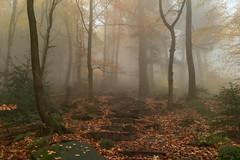 märchenwald (explored!) (dadiolli) Tags: heidelberg badenwürttemberg deutschland fog nebel forest wald königstein 海德堡