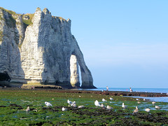DSCN8442 (alainazer) Tags: etretat normandie france eau acqua water mer mare sea sky ciel cielo oiseau bird animal falaise pierres piedras pietra stones