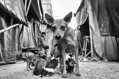 (sharmi_diya06) Tags: street streetphotography streetphot letsexplore outside blackandwhite natgeoyourshot natgeophotographers yourshotnatgeo dog dogs animal people morning