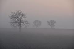 Les brumes de l'aube (Excalibur67) Tags: nikon d750 sigma globalvision contemporary 100400f563dgoshsmc paysage landscape arbres trees brume mist brouillard fog ciel sky champs hiver winter nature