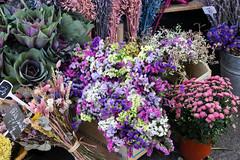 Novembre_110078 (Joanbrebo) Tags: céret vallespir occitanie fr france canoneos80d eosd autofocus flors flores flowers fiori fleur