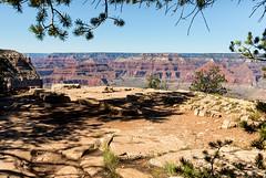 Colors of the Canyon (Ron Drew) Tags: nikon d800 arizona usa nationalpark grandcanyon canyon park trees rocks desert shadows southrim landscape vista