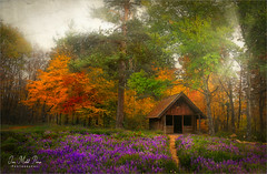 Deep in the wood (Jean-Michel Priaux) Tags: paysage landscape forest tree trees autumn cabin deep way pathway paint painting tale alone lonely colors wood flowers enchanted fantasy fairyland