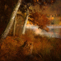 Catch a glimpse (Birgitta Sjostedt) Tags: forest path tree water lake reed grass leaf autumn fall secret lonely alone sweden texture textured paint painted magic mysterous