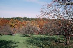 Peter's Hill 3 (aksynth) Tags: contaxg2 zeissplanar35mmf2 arnoldarboreturm petershill emeraldnecklace kodake100 ektachrome