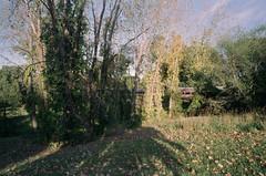 Needham Line at Arnold Arboretum (aksynth) Tags: contaxg2 zeissplanar35mmf2 kodake100 ektachrome arnoldarboretum emeraldnecklace mbta needhamline