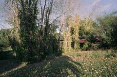 Needham Line at Arnold Arboretum 2 (aksynth) Tags: contaxg2 zeissplanar35mmf2 kodake100 ektachrome arnoldarboretum emeraldnecklace mbta needham line