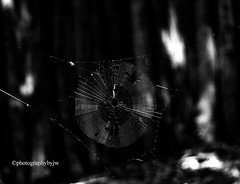 Spider Web (Photographybyjw) Tags: spider web hiding shadows this stark black white shot i north carolina ©photographybyjw rural country