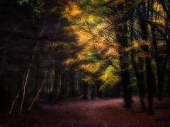 Once-upon-a-Fall.. (Colin-47) Tags: fall autumn trees foliage forest woodland 2019 onceuponafall nature interesting colin47 panasonicdmcg80 olympusmzuiko60mmf28macro microfourthirds