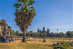 Angkor Wat, Cambodia (Janos Kertesz) Tags: tree sky palm green nature tourism travel garden blue park relax outdoor tropical city angkor angkorwat cambodia
