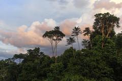 São Gabriel da Cachoeira-AM (Johnny Photofucker) Tags: sãogabrieldacachoeira am amazonas amazon amazônia floresta forest foresta selva jungle giungla rainforest vegetação mata nuvem nuvole nuvens nuvola cloud clouds paisagem landscape natureza natura nature lightroom jacarandácopaia jacarandá cabeçadocachorro brasil brazil brasile 6d 40mm pancake