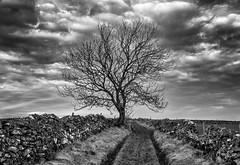 Tree (l4ts) Tags: landscape derbyshire peakdistrict whitepeak tideswell limestoneway tree drystonewalls lane blackwhite monochrome cloudscape clouds