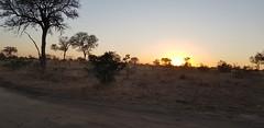 Kruger Sunset (Rckr88) Tags: krugernationalpark southafrica kruger national park south africa sunset krugersunset krugersunsets sunsets sun sunlight tree trees nature outdoors travel