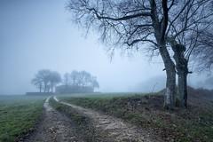 Camino (JRP Fotografía) Tags: guitiriz iglesia invierno niebla árbol