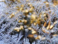 Frosty Golden Light (kfocean01) Tags: frost ice winter macro nature abstract bokeh designs patterns light sunlight awardtree