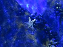 img_2258 (Ricardo Jurczyk Pinheiro) Tags: riodejaneiro brasil aquário zonaportuária aquario estreladomar orlaconde