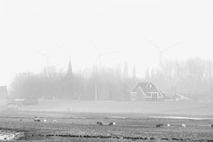 Mist Mills (Alfred Grupstra) Tags: farm agriculture ruralscene barn nature field landscape nonurbanscene outdoors nopeople grass industry tree sky meadow ranch scenics builtstructure pasture fog blackandwhite sheep