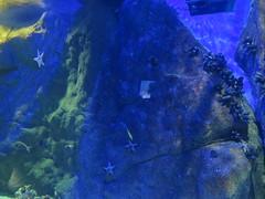 img_2261 (Ricardo Jurczyk Pinheiro) Tags: riodejaneiro brasil aquário zonaportuária aquario estreladomar orlaconde