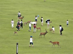 Nara (magellano) Tags: nara japan giappone gente people cerbiatto deer collina hill