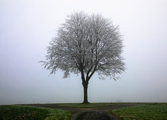 Kreisel (andre.kirtz) Tags: aargau nebel horben januar frost schweiz freiamt baum kreisel
