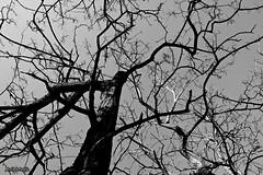 Un fantasma bueno. (AviAntonio) Tags: arbre branques virat hivern árbol ramas virado invierno