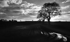 Racecourse Lane (Dave.Miles) Tags: stourbridge racecourselane olympus olympusom2 24mmzuiko redfilter ilford ilfordfp4plus westmidlands 35mmfilm 35mm analogue film filmisnotdead filmphotography