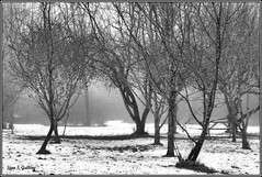 January - Winter in the park (Stan S. Gallery) Tags: january snow winter cold freezing wintry ground grass trees branches fog foggy mist misty hazey haze park landscape blackandwhite monochrome contrast canonrebel atmosphere landscapes picnictable outdoors path overcast