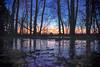 Morning in the woods... (BigWhitePelican) Tags: helsinki finland lauttasaari morning sunrise reflections ice canoneos70d adobelightroom6 niktools 2020 january