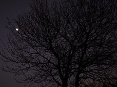 Luna en el atardecer (Tanialop) Tags: luna árbol bosque invierno atardecer moon tree forest winter sunset