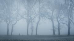 The secret life of trees (Pascal Riemann) Tags: ruhrgebiet deutschland baumgruppe nebel landschaft natur waltrop germany landscape nature outdoor