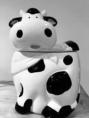 Moo! (ruthlesscrab) Tags: moo cow blackandwhite bw bn werehere hereios wah wednesday cookiejar