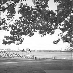 Vancouver - Film hasselblad (Photo Alan back Feb 12) Tags: vancouver canada film filmcamera filmhasselblad hasselblad hasselblad503cw blackwhite blackandwhite bw monochrome