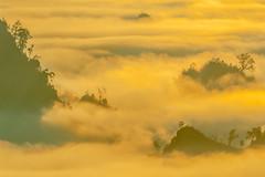 _MG_6263-64.0212.Tân Lập.Mộc Châu.Sơn La (hoanglongphoto) Tags: asia asian vietnam northvietnam northernvietnam northwestvietnam landscape scenery vietnamlandscape vietnamscenery mocchaulandscape nature naturelandscape sunrise clouds mountain flanksmountain vietnammountainouslandscape cloudsofmocchau canon canoneos5dmarkii canonef100400mmf4556lisusm tâybắc sơnla mộcchâu tânlập thiênnhiên thiênnhiênmộcchâu natureinmocchau bìnhminh bìnhminhmôcchâu mây mâymộcchâu núi sườnnúi phongcảnhvùngnúi topmountain dãynúi đỉnhnúi mâyluồnmộcchâu forest theforest rừng hoanglongphoto