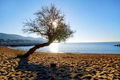 Carqueiranne beach (hbensliman.free.fr) Tags: travel france nature mediterranean outdoor outside sea coast coastline beach sunrise harbor