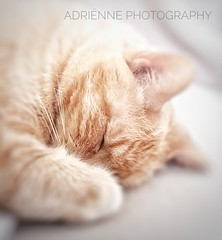 delicate love (♥Adriënne -- For a Better and Peaceful World!) Tags: alfie soft delicate ♥adrienne addyvanrooij othene zeeuwsvlaanderen terneuze acateveryday samsungs9 snapseed love friend pet