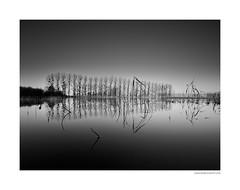 Serie miroir (1) (Boris Dumont) Tags: bw bwphotography fineartphotography fineart relfection miroir seascape lake