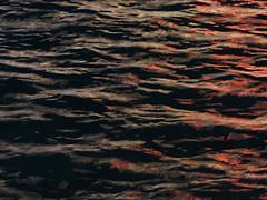 Night Fever (louise peters) Tags: reflections reflecties pond vijver water wind hotelbellagio lasvegas black zwart rood red neon lights licht lichtjes nevada usa vs america amerika
