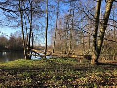 Wandelen (Fijgje On/Off) Tags: vijver pond bomen trees winter fijgje appleiphone8 iphone8backcamera399mmf18 jan2020 beversporen