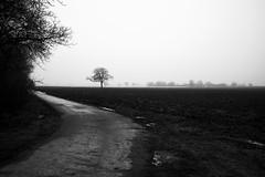 Nebel ... bei Meckenheim (Manfred Hofmann) Tags: bild schwarzweis öffentlich flickr orte brd kurpfalz projekte jahreszeiten pfalz