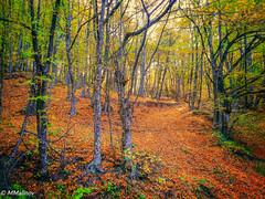 One of my favorite place (M Malinov) Tags: forest bulgaria autumn eu europe colors colorful green tree nature българия гора дървета есен цветове оранжево зелено жълто природа yellow orange сезон season s