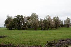 Romsicht? ....nee 'geen zicht'. (Snoek2009) Tags: flal flalmarengreidewandeltocht friesland lytshuzen farm trees green grass fence walkingtour polder ditch