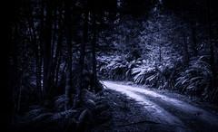 Dirt Road # 19 (Graeme O'Rourke) Tags: lrcfa20873v3 explore912020 national outside nature blue tree fern light landscape blackandwhite
