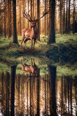 Hirsch am Wasser (Gruenewiese86) Tags: natur landschaft wald harz wälder trees nature animal misty forest woodland mammal outdoors woods wildlife deer antlers contact conceptual gaze world mist eye stag moody seasonal foggy grand elk ferns majestic autumnal magnificent wooded plants fall fog composite outside photography one 1 colorful looking vibrant foliage single concept cervus autumn red wild season flora nobody