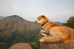 On Top of the Hill, Ella (Geraint Rowland Photography) Tags: asia srilanka travel nature animals pets dogs dog takenwithacanon5d4anda1635mmcanonwideanglelens wwwgeraintrowlandcouk dogportrait loveable mansbestfriend gettyimagessrilanka mountain hill hike outdoors viewpoint wideangle exploring wanderlustmagazine wanderlust canonphotography